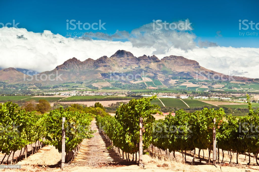 Stellenbosch vineyards royalty-free stock photo