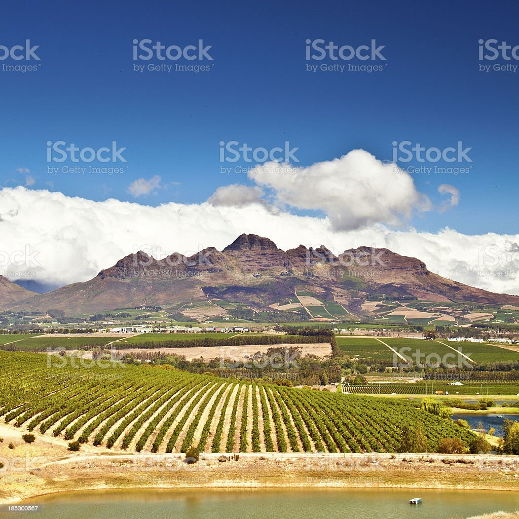 Stellenbosch vineyards royalty-free stock photo