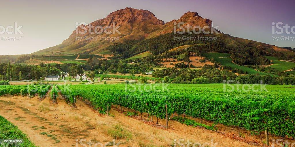 Stellenbosch, Western Cape, South Africa stock photo