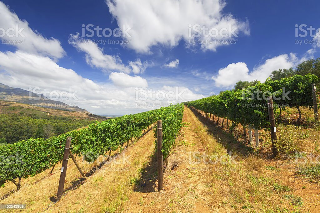 Stellenbosch,  wine growing region in South Africa royalty-free stock photo