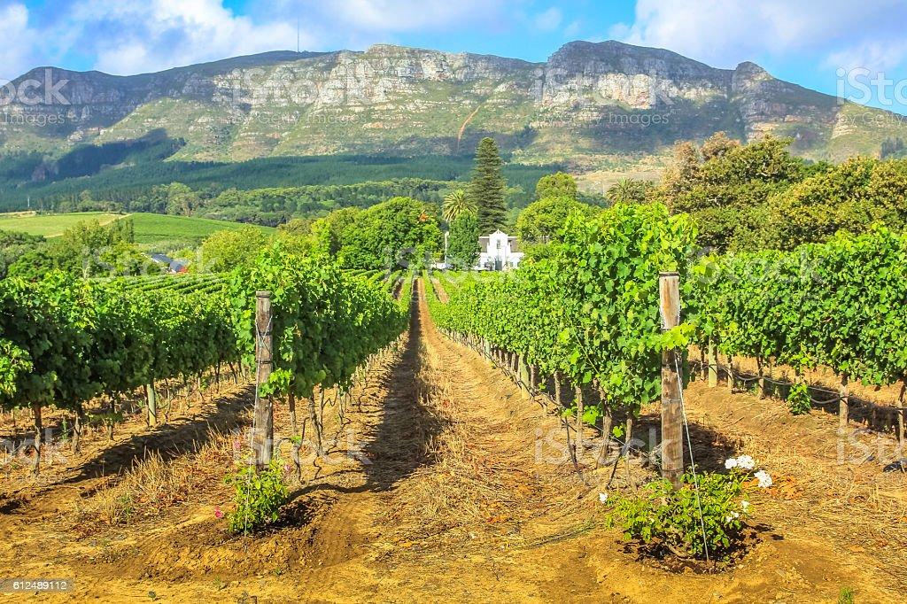 Stellenbosch Wine Route stock photo