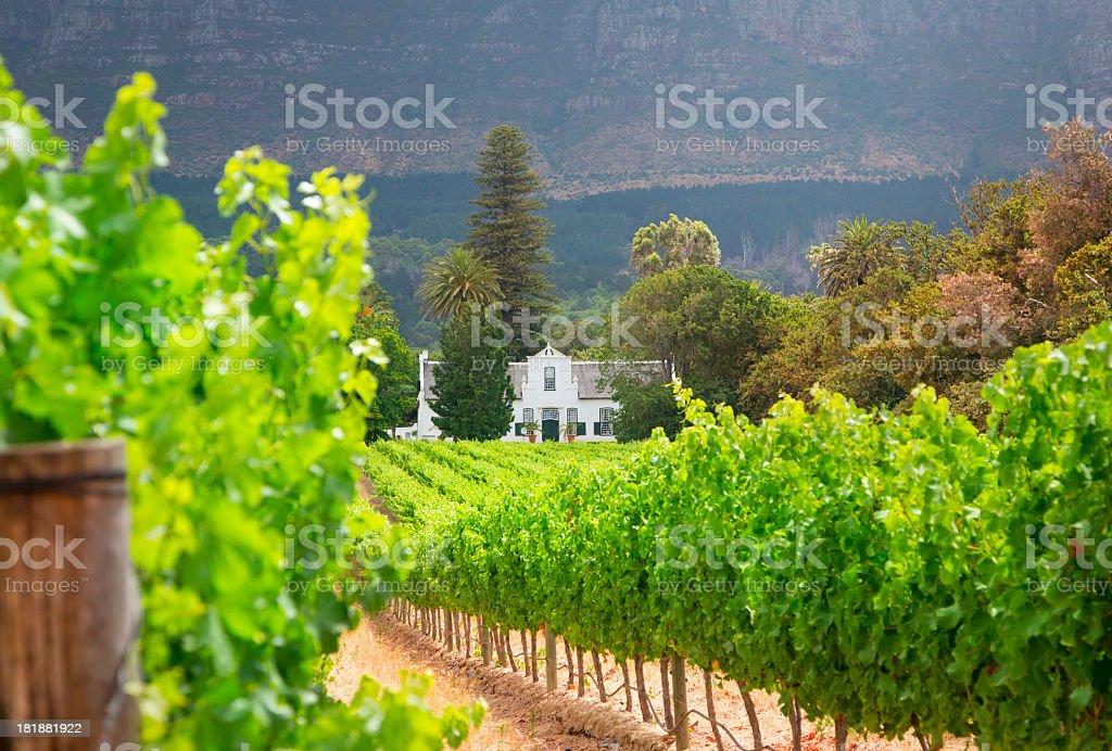 Stellenbosch Winelands stock photo