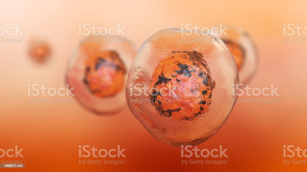 Stem Cell stock photo