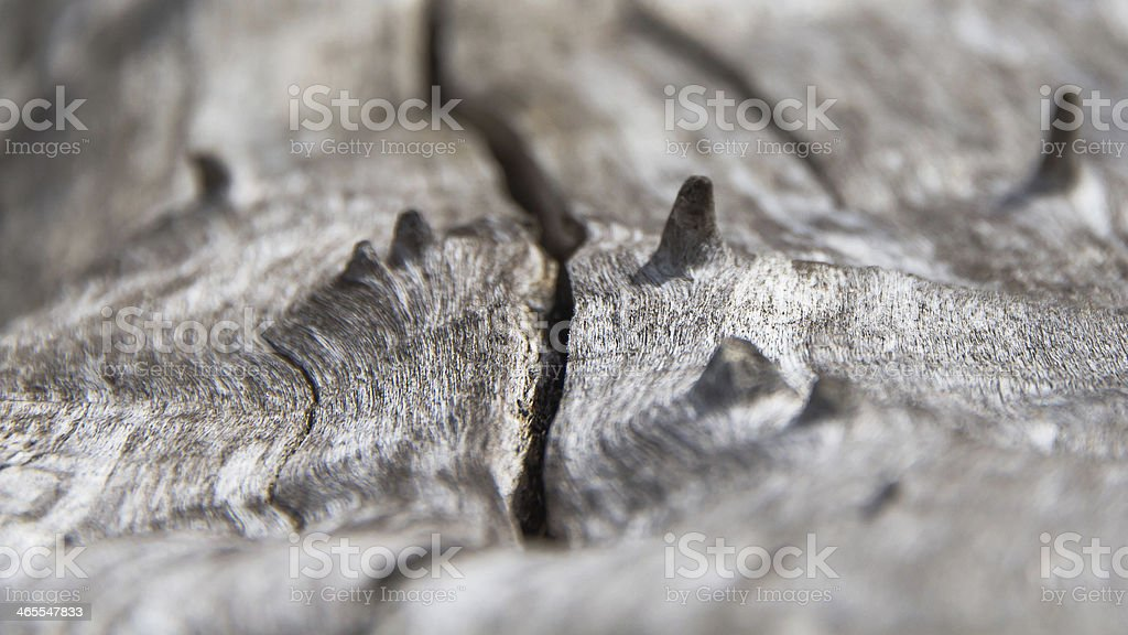 Stem Dry - Tronco seco stock photo