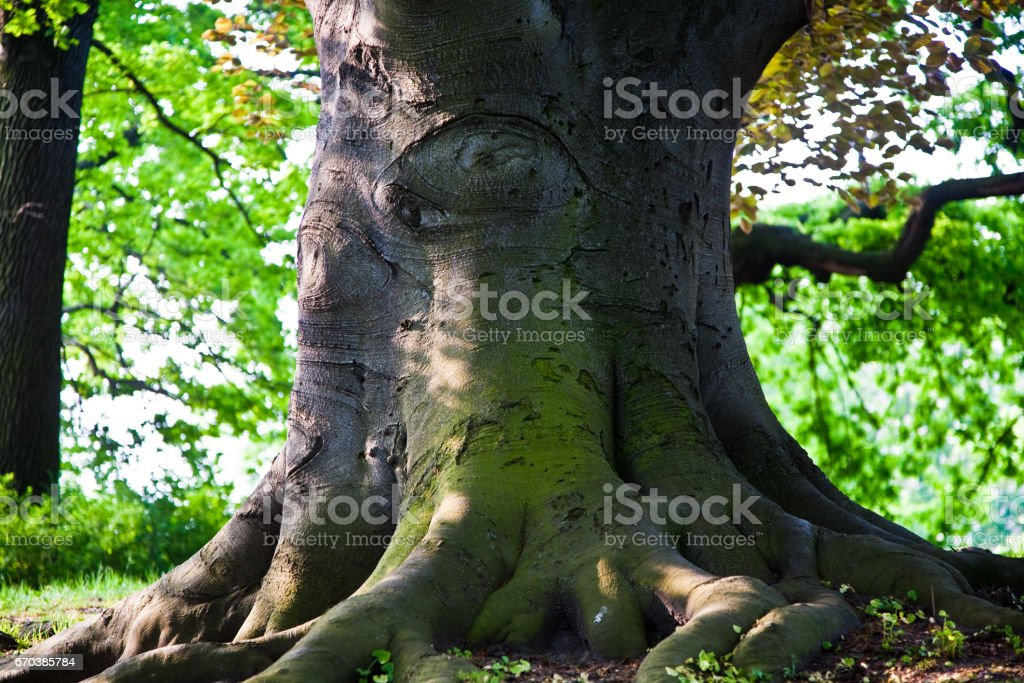 stem of oak trees in fascinating light in a park in Vienna stock photo