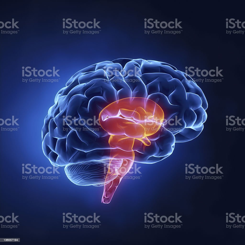 Stem part - Human brain in x-ray view stock photo