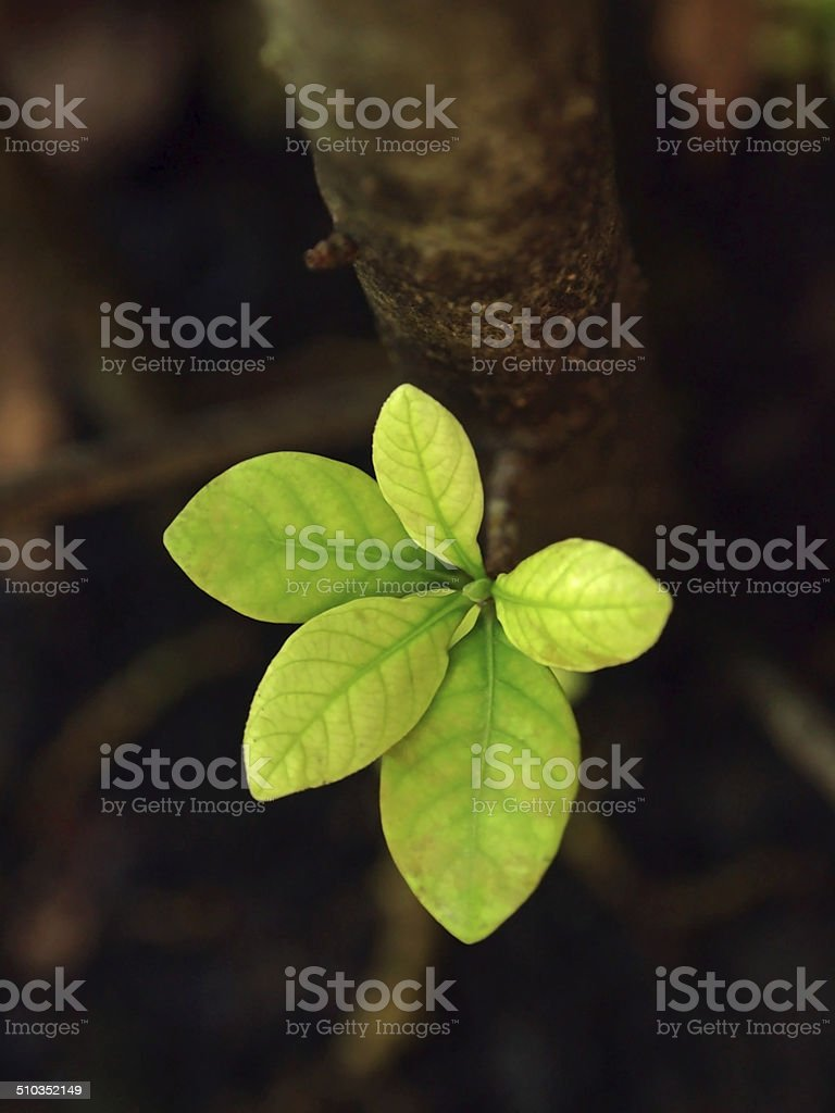 Stems and leaves stock photo