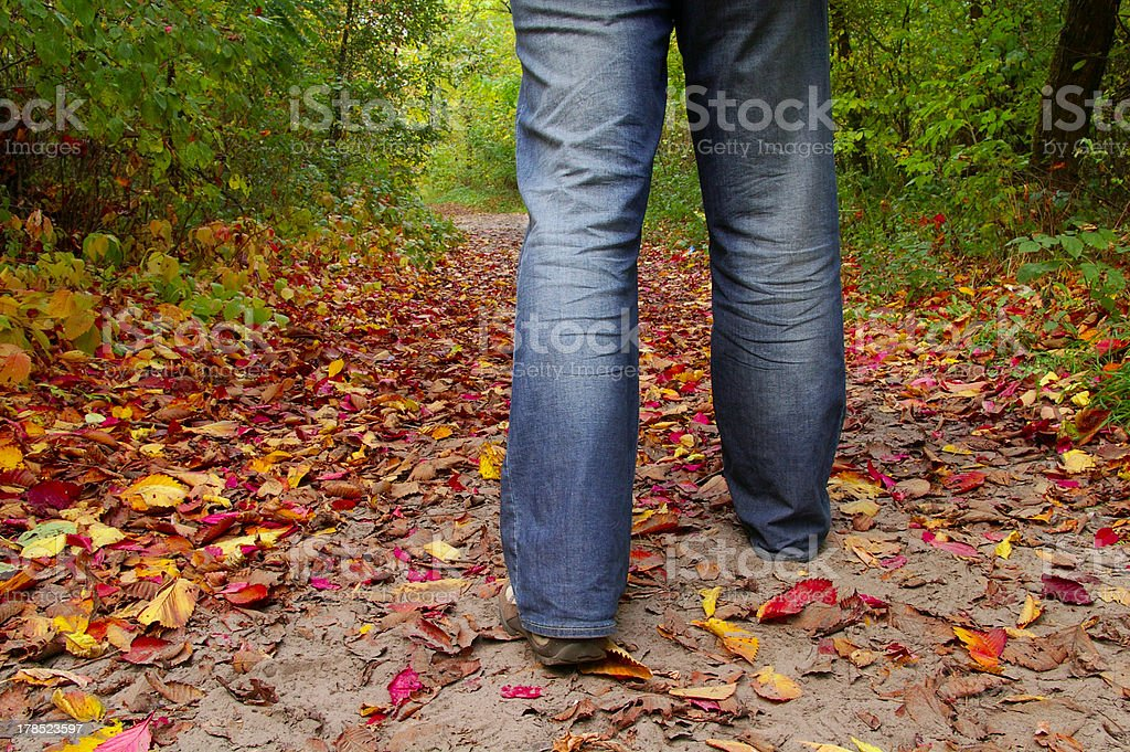 Step to the autumn royalty-free stock photo