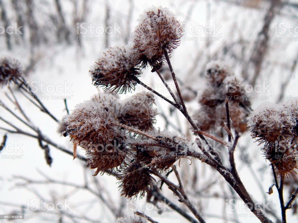 Steppe grass under the snow close-up stock photo