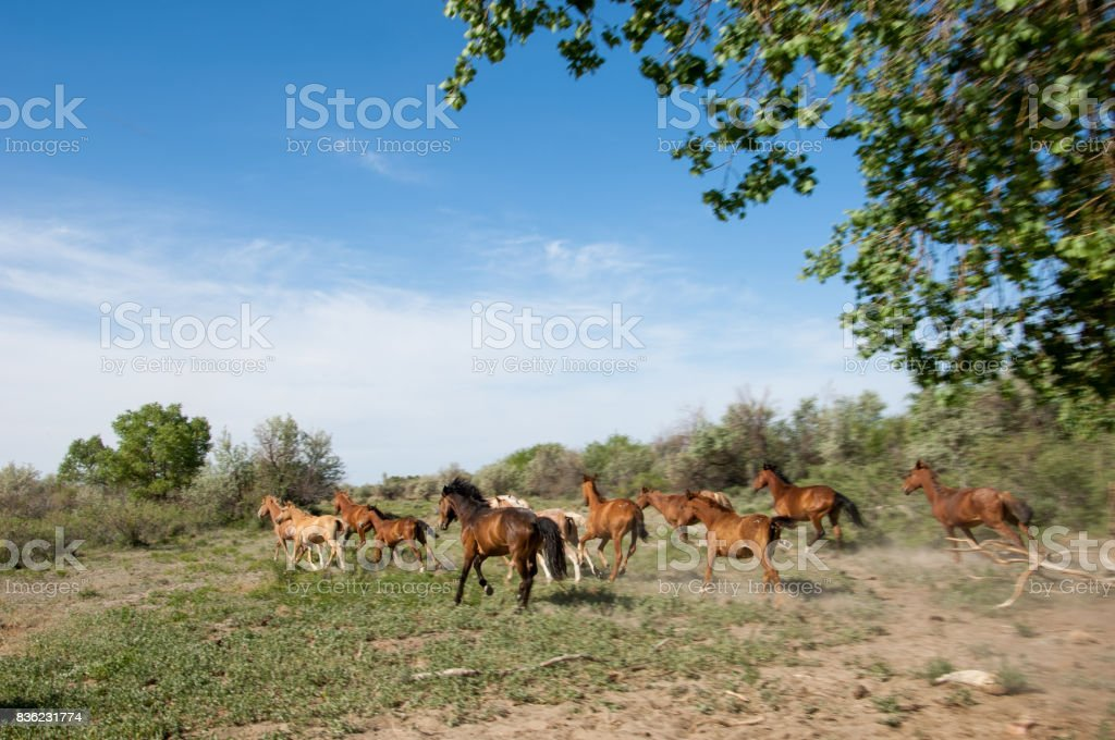 Steppe. horses in the steppe stock photo