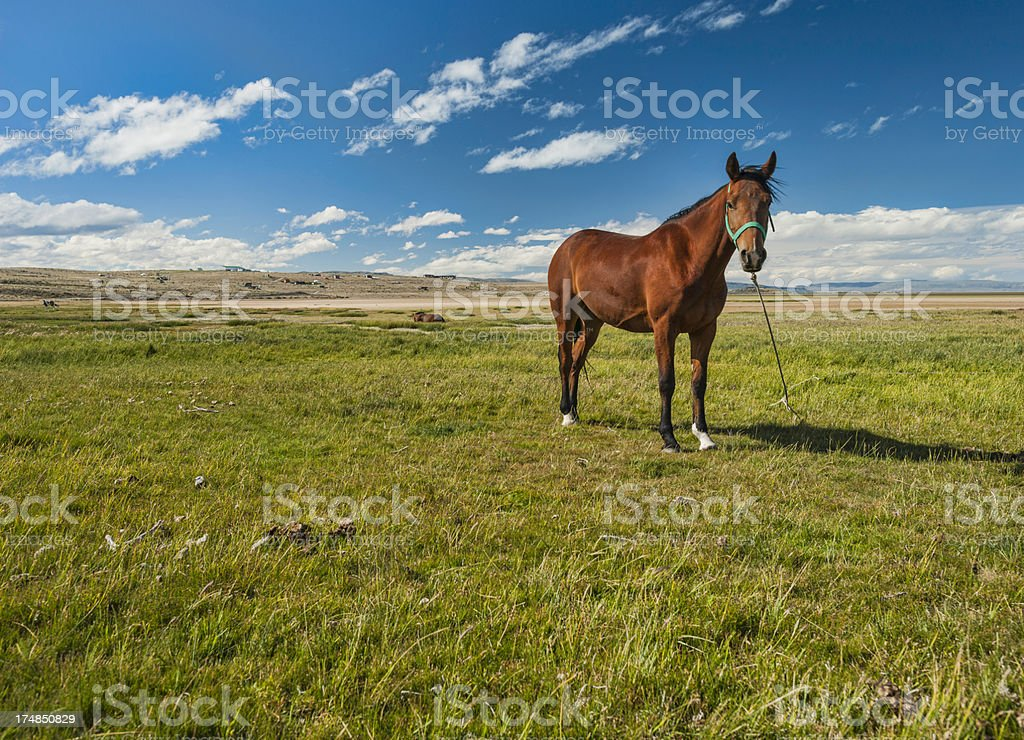 Steppe in Santa Cruz royalty-free stock photo