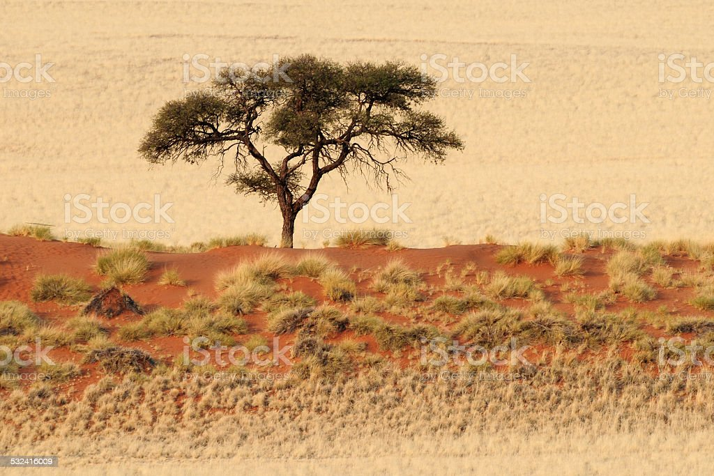 Steppe landscape in The Namib-Naukluft National Park stock photo