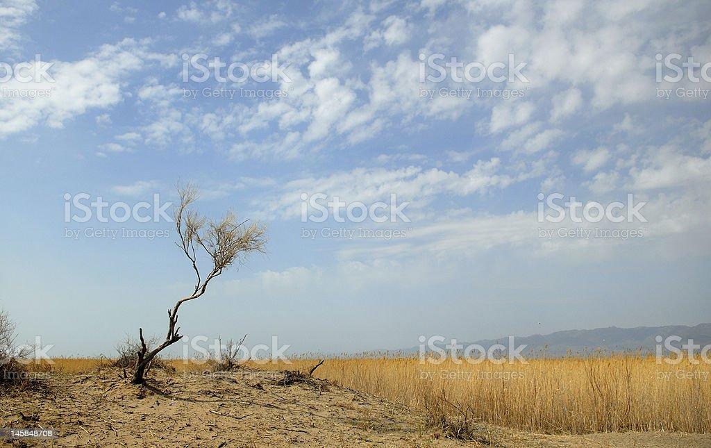 steppe stock photo