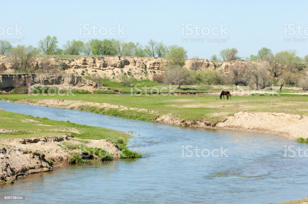 steppe, prairie, veld, veldt stock photo
