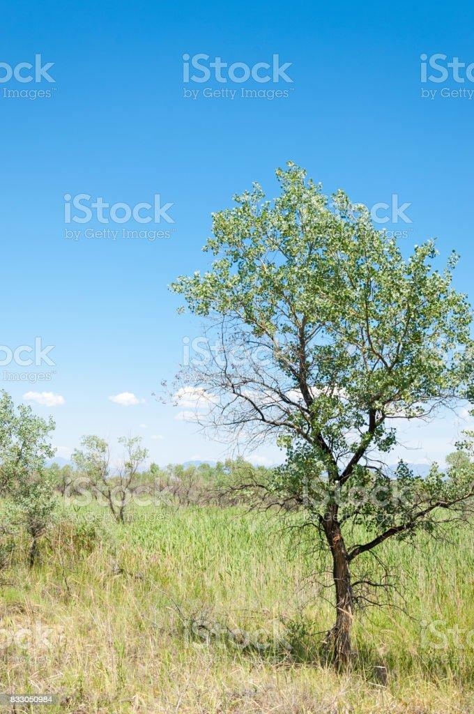 steppe summer. Turgai save. Lake in the desert stock photo
