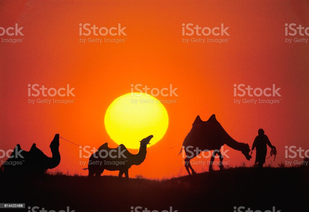 Steppe, sunset, people, camels. Astrakhan region, Russia stock photo