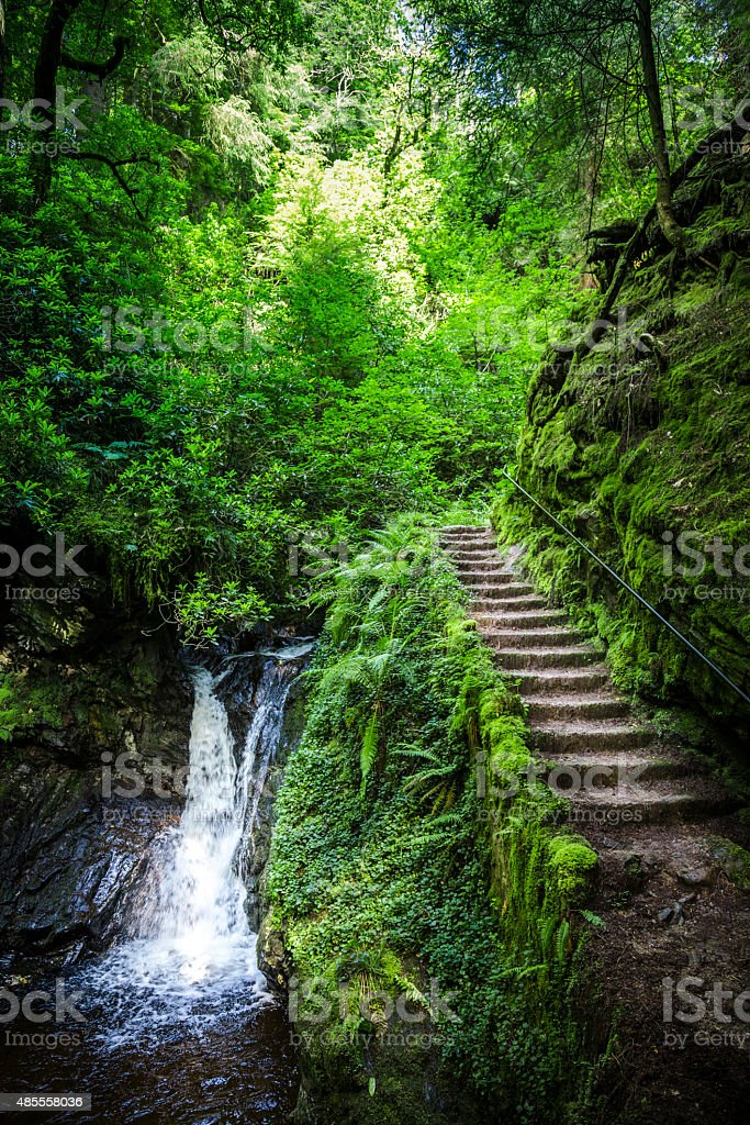 Steps by a waterfall through a green Scottish forest stock photo