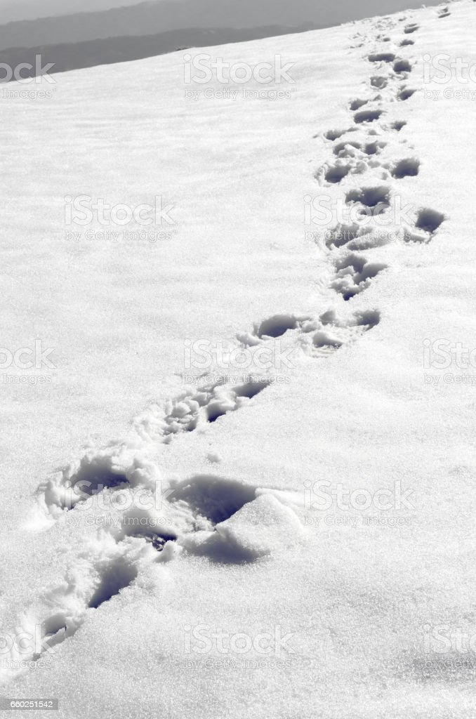 Steps in the snow on the mountain stock photo