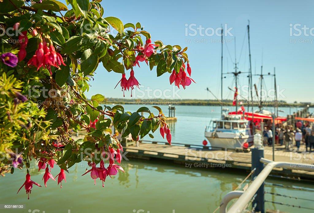 Steveston Docks Flower Basket stock photo