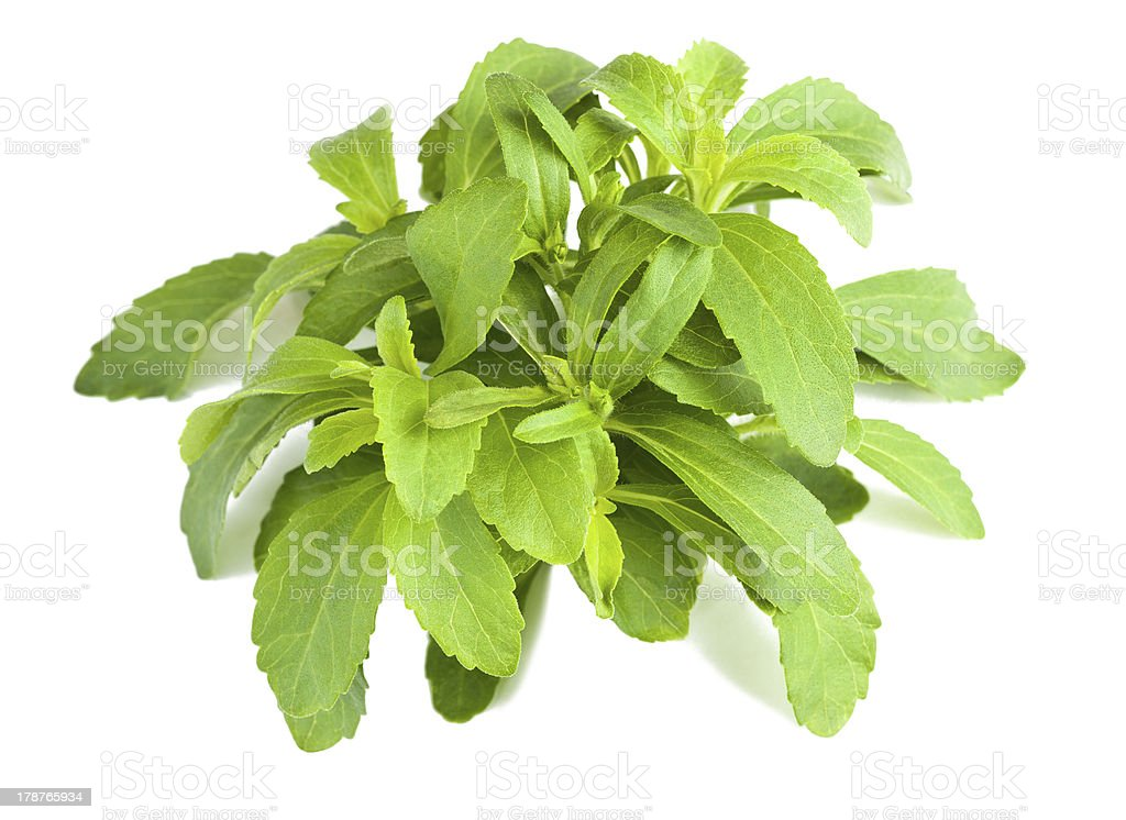 stevia bunch stock photo