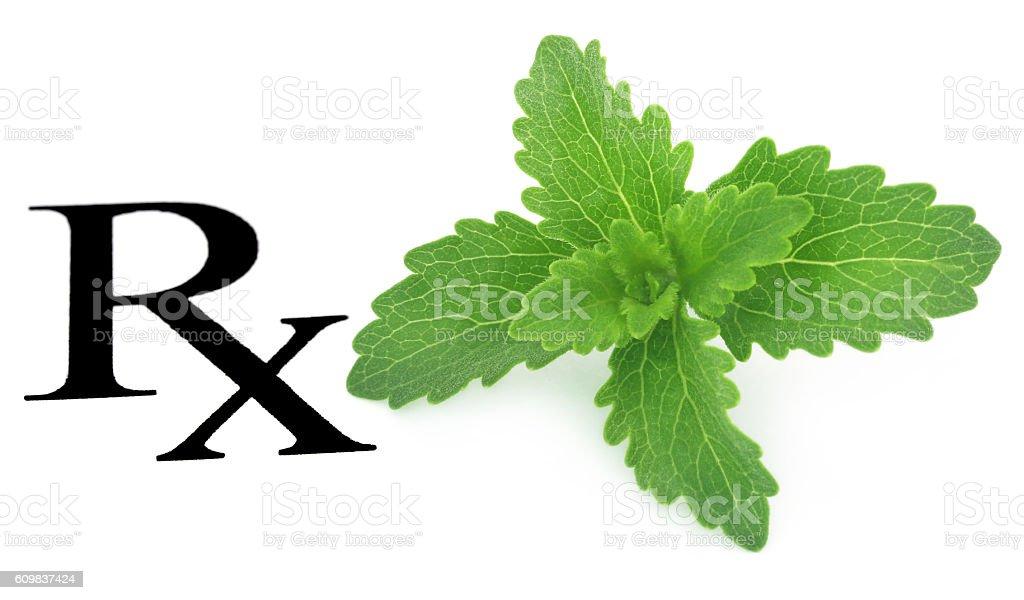 Stevia leaves as medicine stock photo