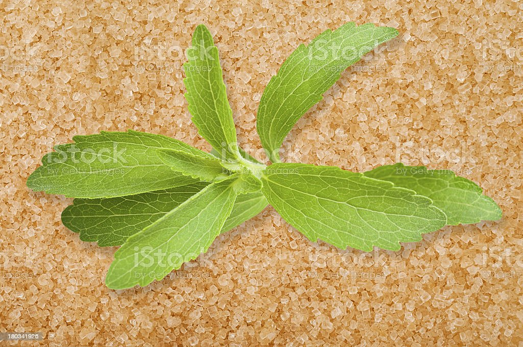 Stevia leaves royalty-free stock photo