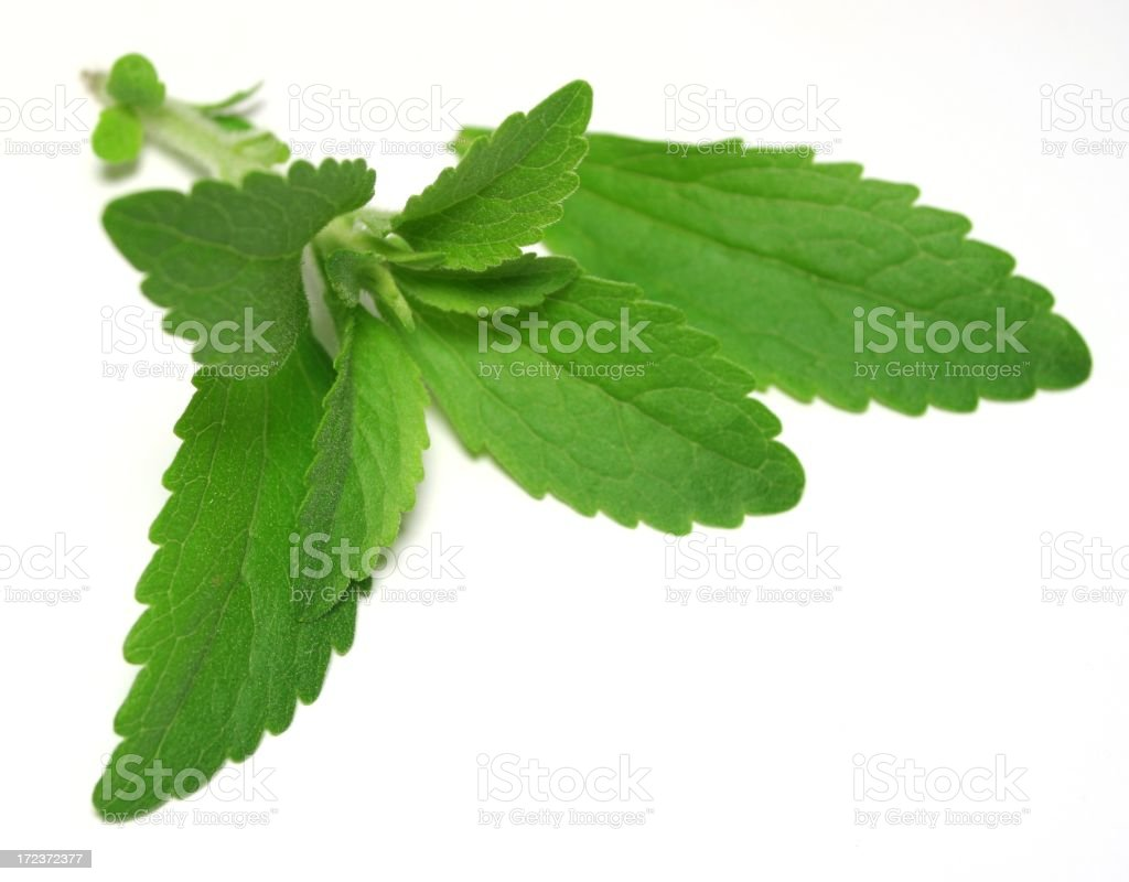 Stevia or Sweet Herb against white background stock photo