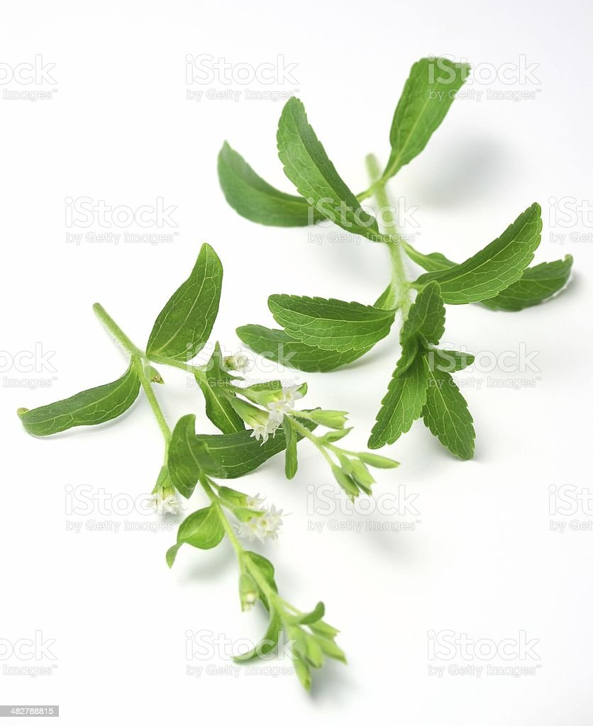 Stevia or Sweet Herb stock photo