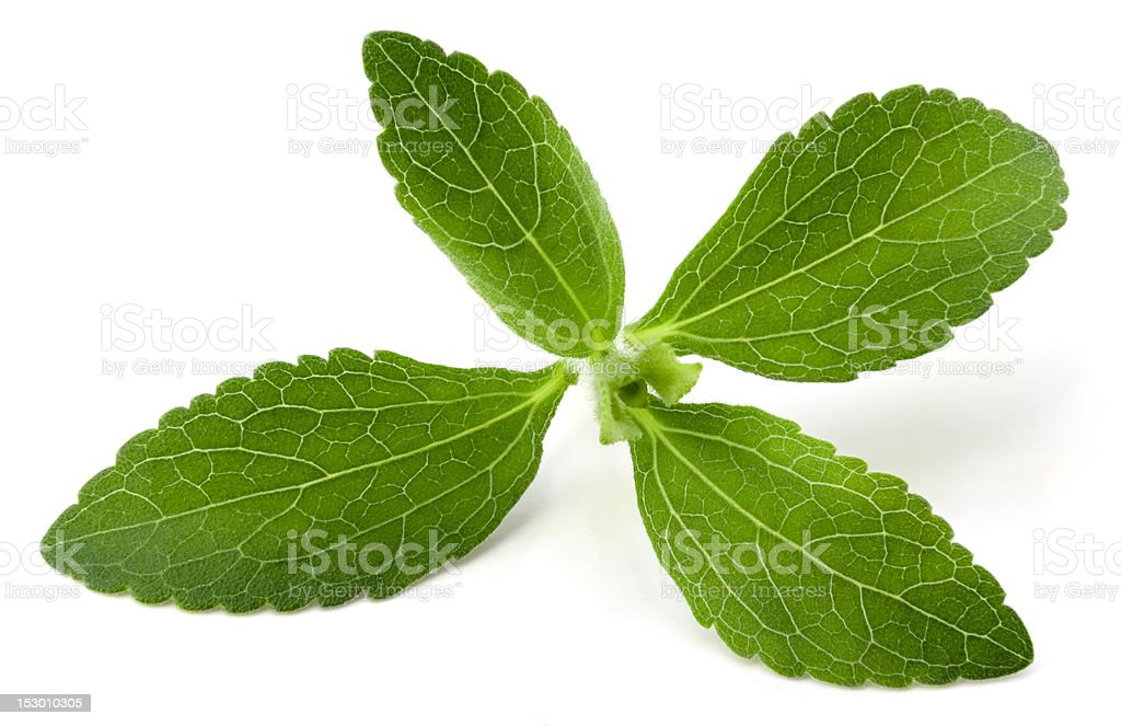 Stevia royalty-free stock photo