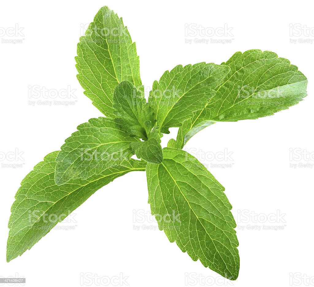 Stevia Rebaudiana Leafs Cut Out stock photo