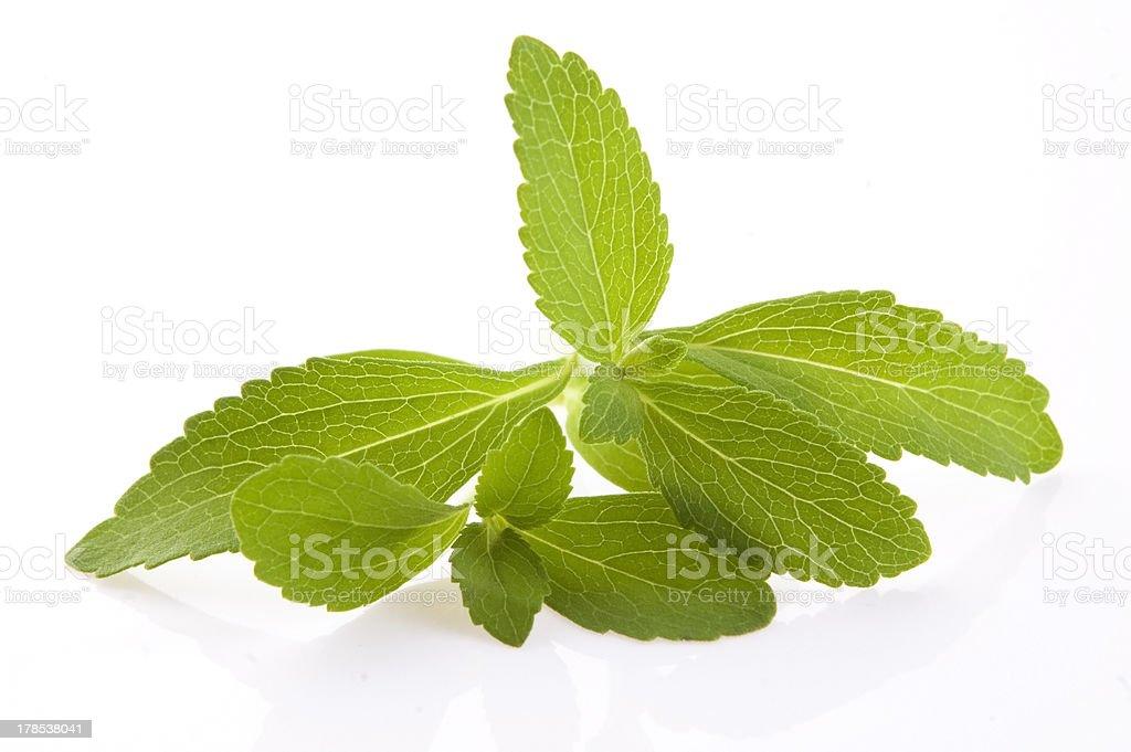 Stevia Rebaudiana leafs isolated on white background royalty-free stock photo