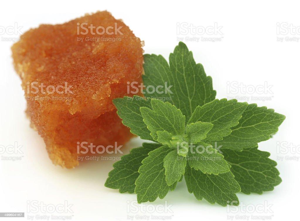 Stevia with molasses stock photo