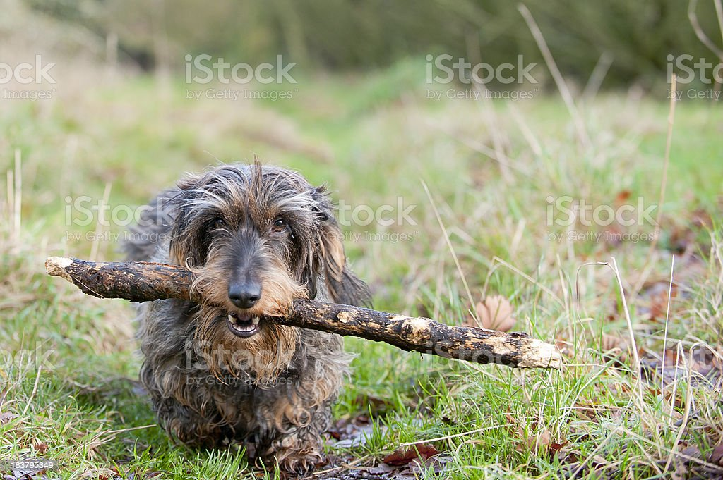 stick it out stock photo