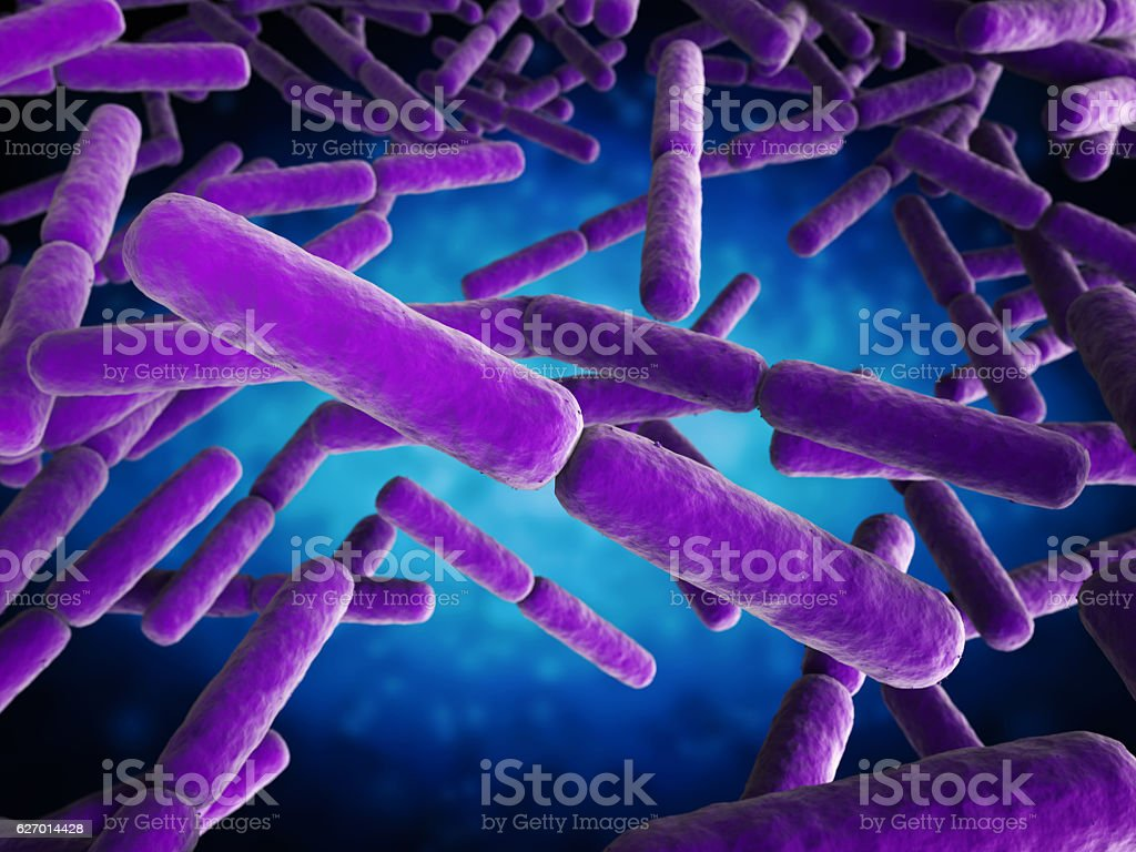 stick shape bacteria cells stock photo