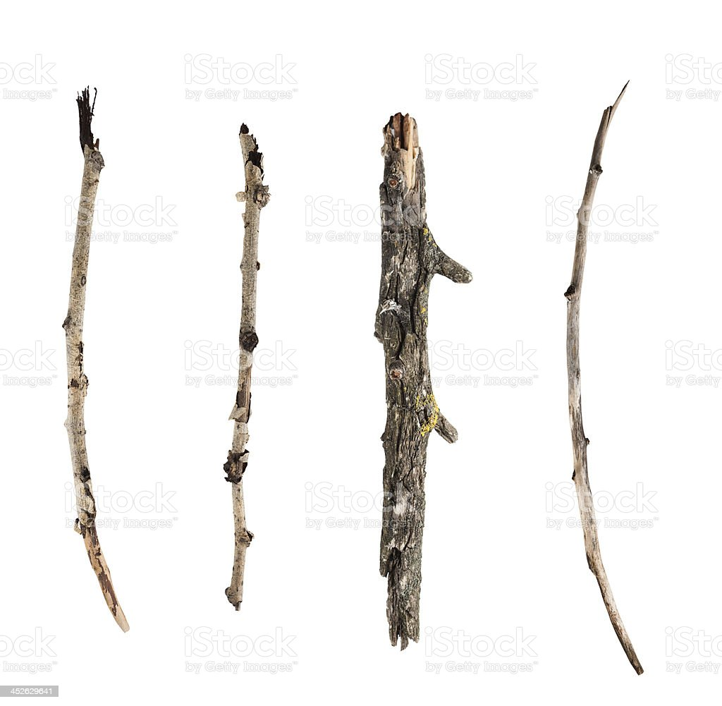 Sticks and twigs isolated on white background stock photo
