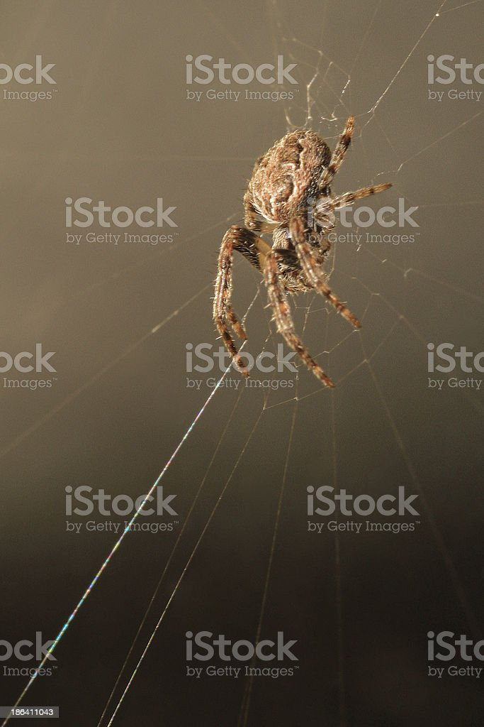 Sticky footing royalty-free stock photo