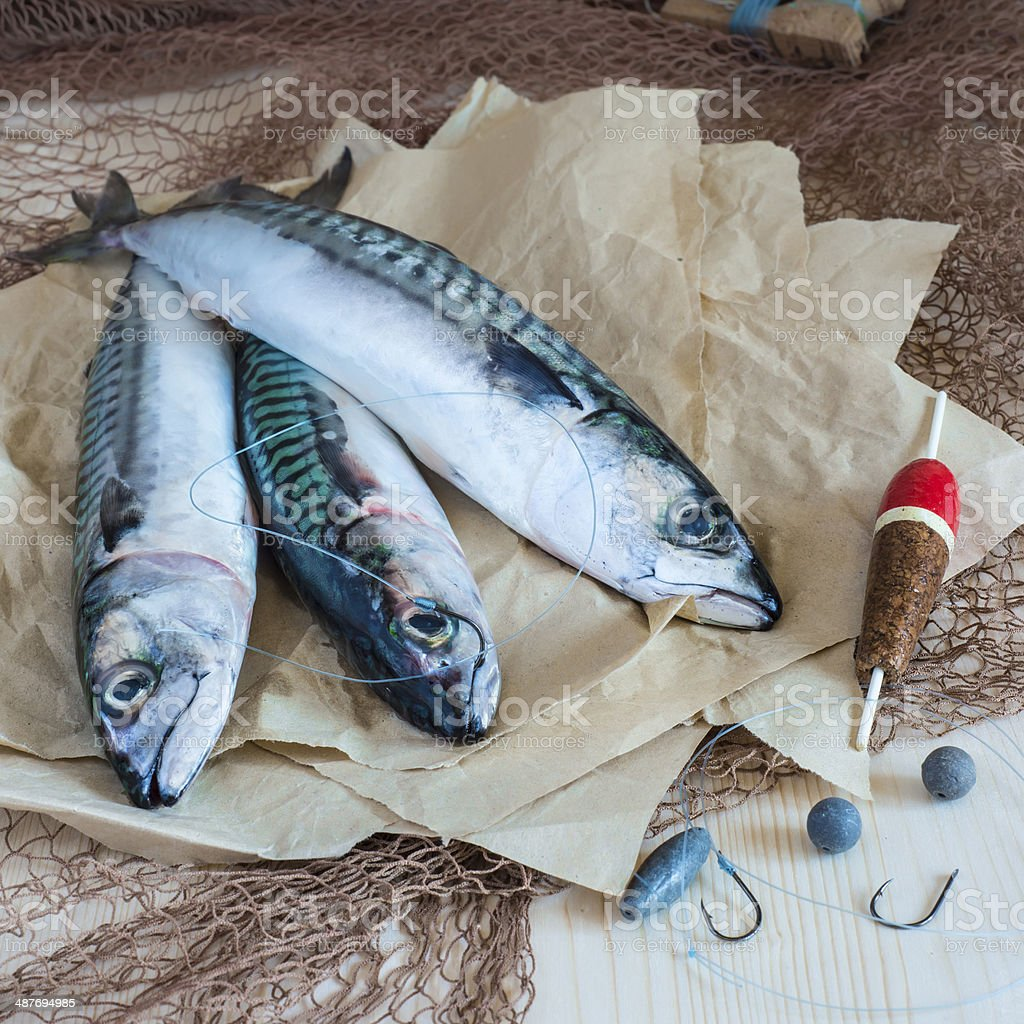 Still life about sportive fishing for mackerel stock photo