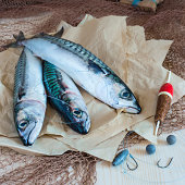 Still life about sportive fishing for mackerel