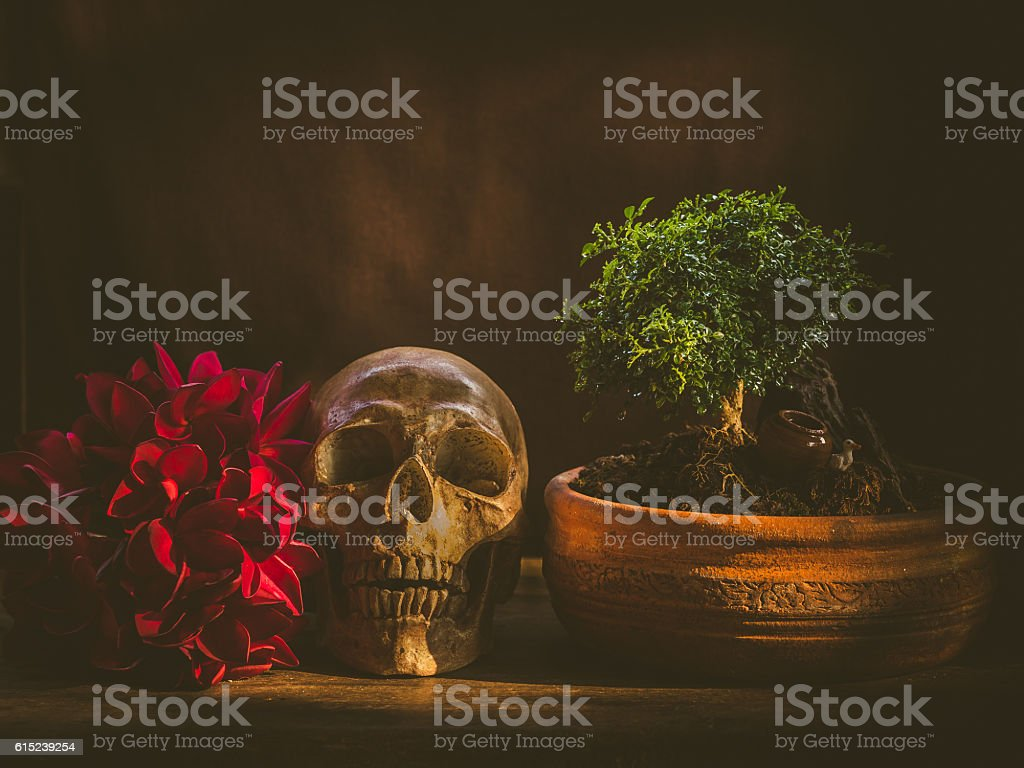 still life art skull stock photo