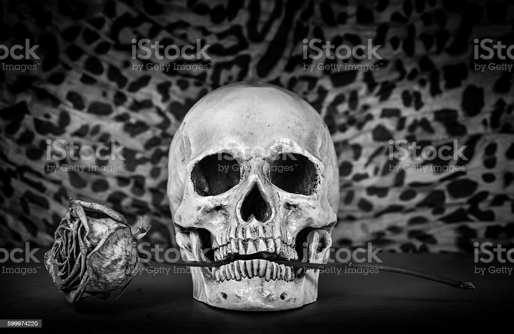 Still life, Black and white of human skull stock photo