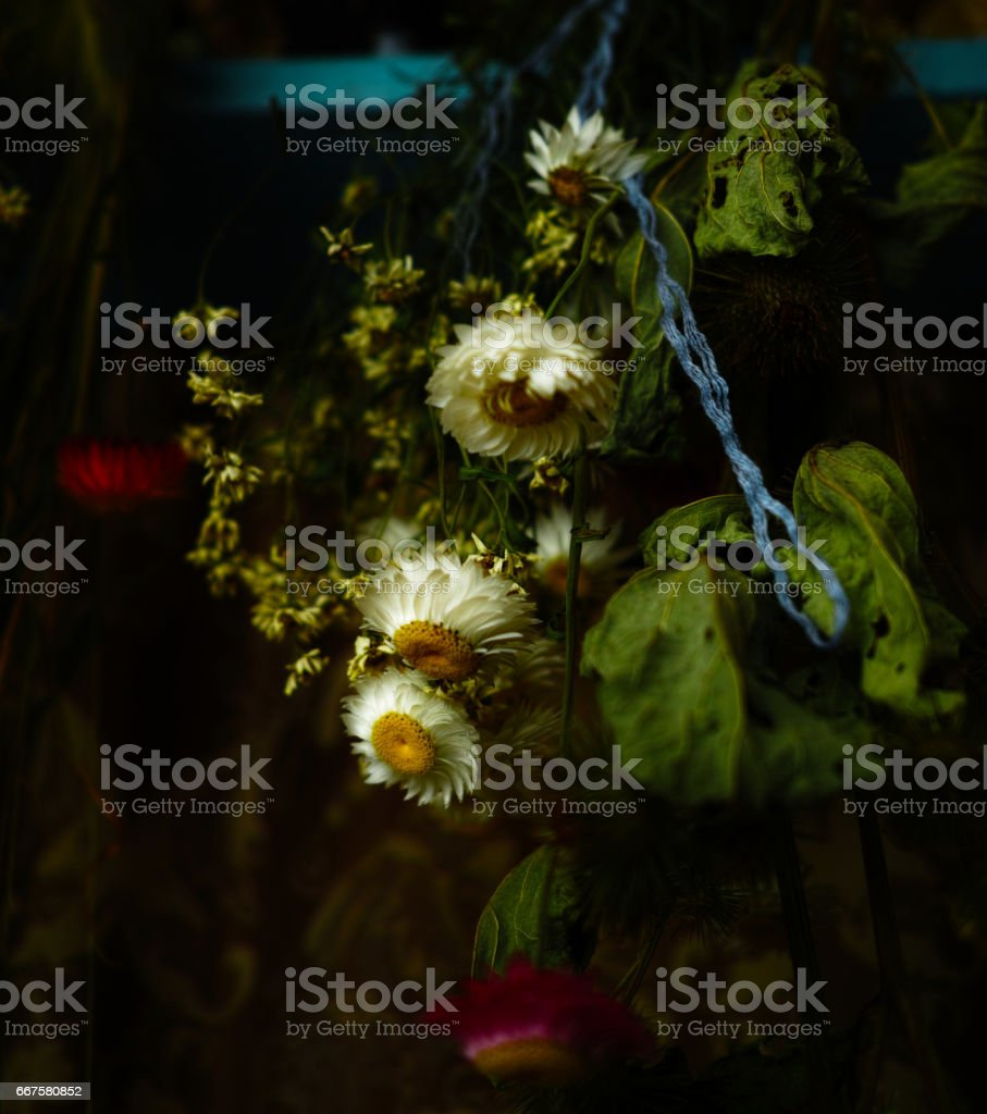 still life bouquet of dry flowers stock photo