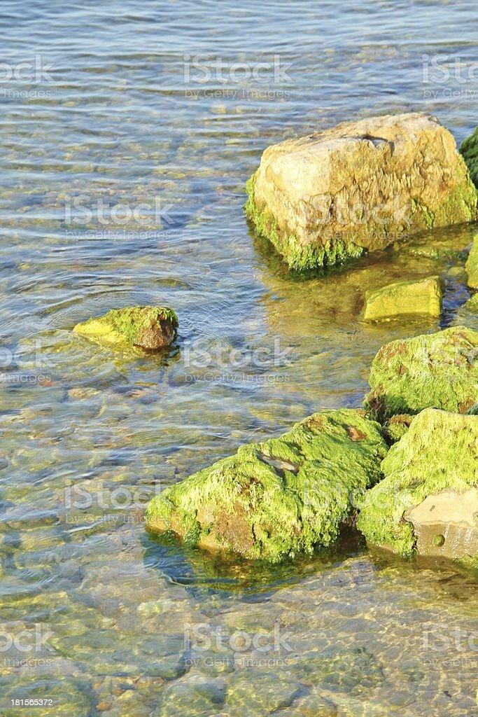Still life - Coast royalty-free stock photo