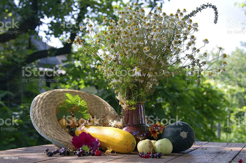 still life, daisies royalty-free stock photo