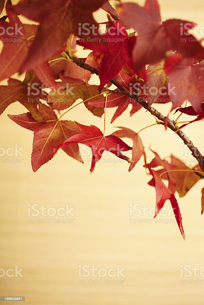 Still life of red maple leaves royalty-free stock photo