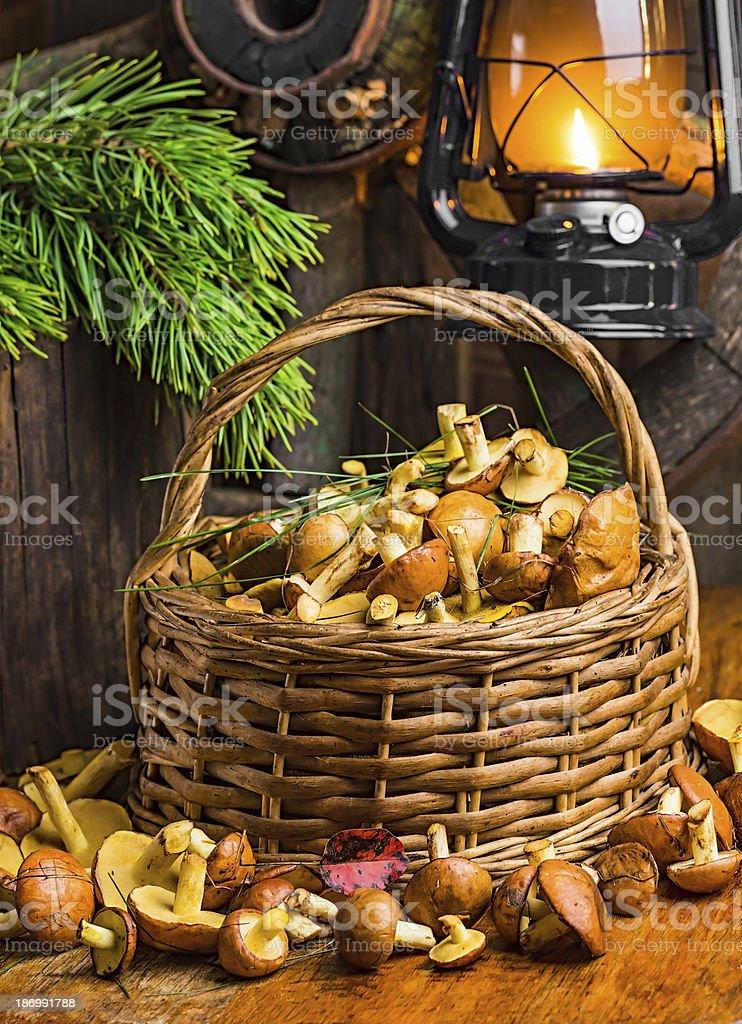 Still life of yellow boletus mushrooms royalty-free stock photo