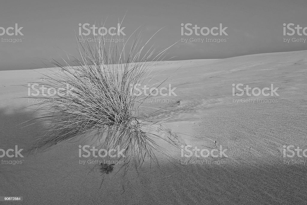 Still Life on a Dune royalty-free stock photo