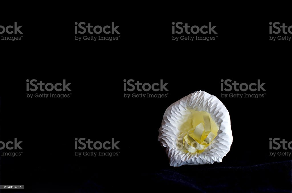 Still life photography by small contrainer and flower stock photo