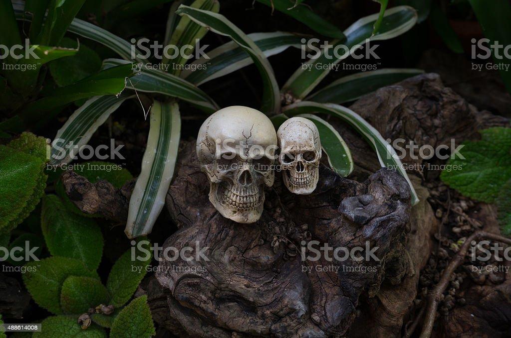 Still life photography, Double skull in the backyard. stock photo