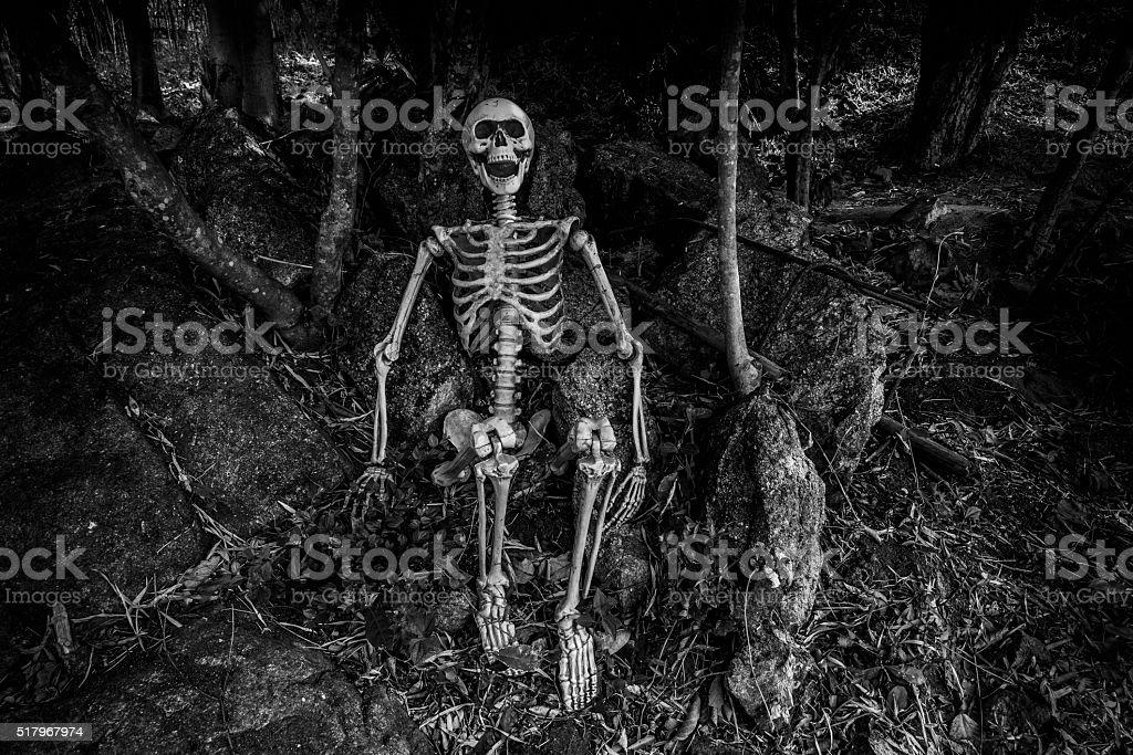 Still life photography with human skeleton in forest stock photo