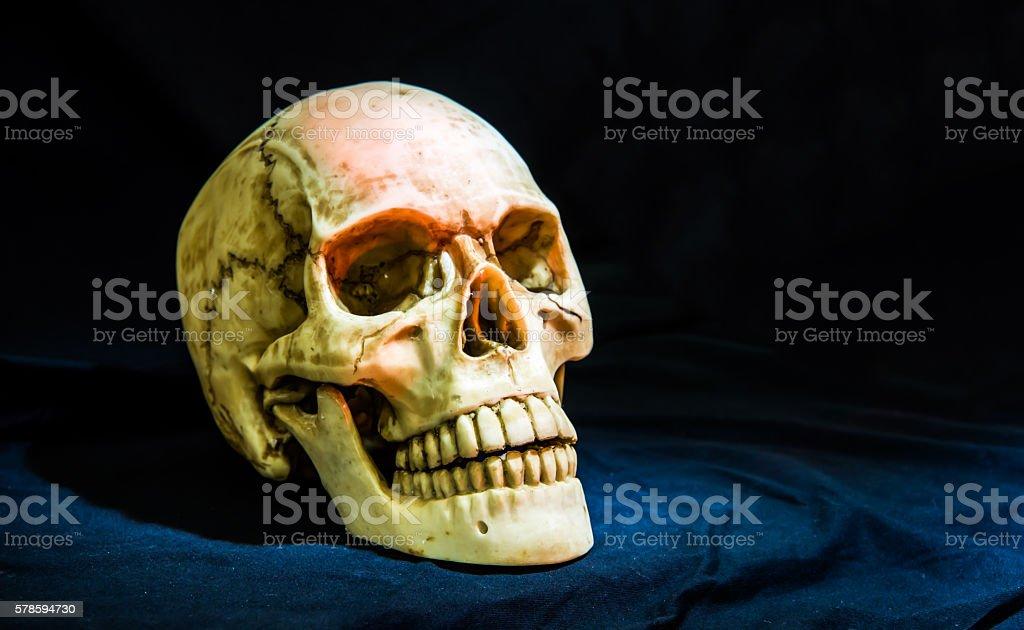 Still life photography with human skull stock photo